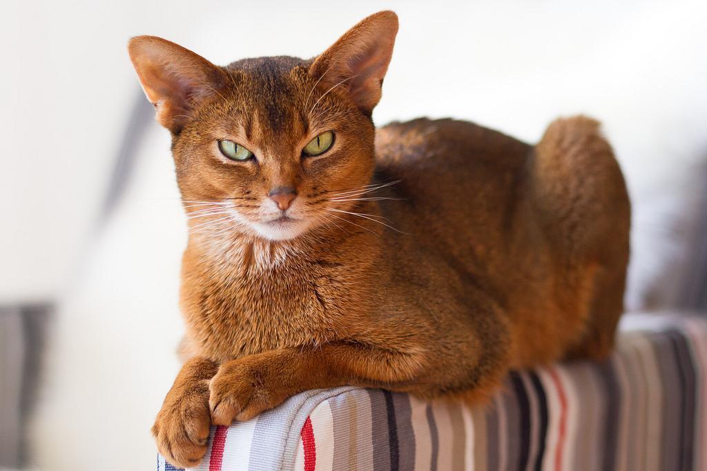 Средства подавления сексуальной активности у кошек